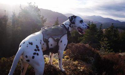 mountain bike trail dog